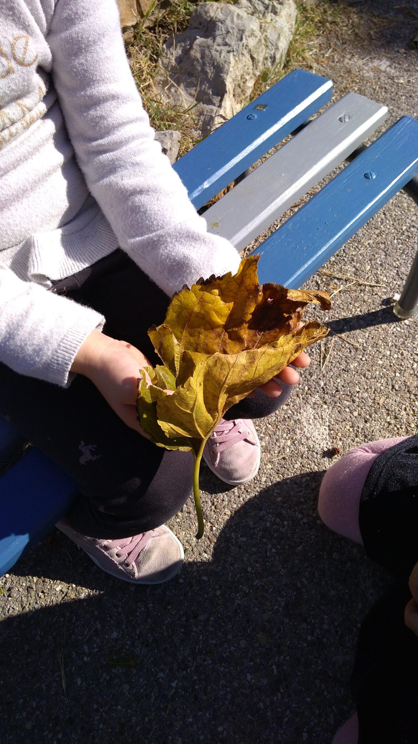 Ecole Sainte Marie Fuveau espaces verts cadre bucolique mains d'une petite fille tenant en admiration une grande feuille de mûrier jaunie