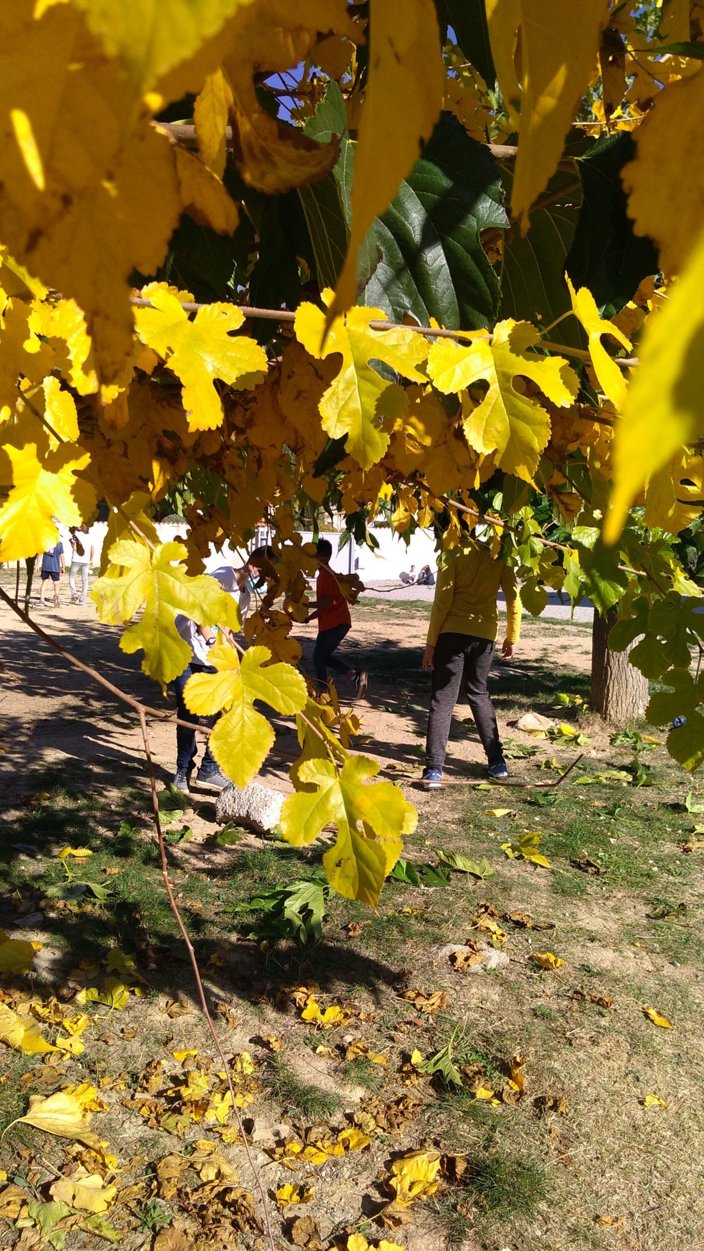 Ecole Sainte Marie Fuveau espaces verts cadre bucolique enfants jouant dans le champ avant plan de la photo feuilles de müriers janies et d'autres vertes
